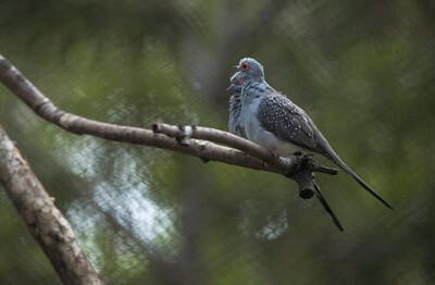 Birds-5864