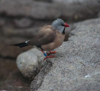 Birds-5853