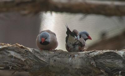 Birds-5842